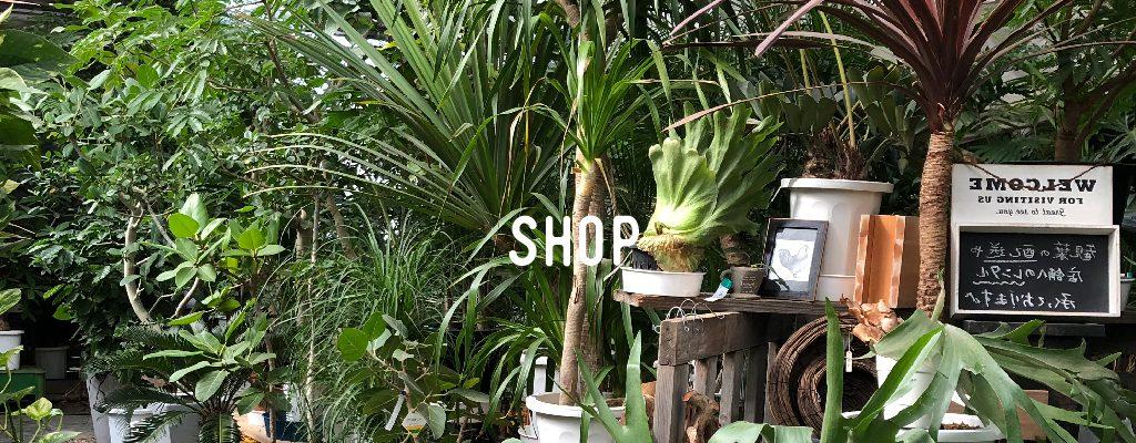 sv_title_shop